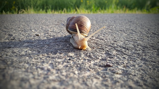 L'escargot qui trace sa route